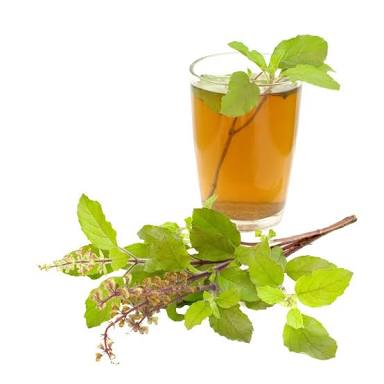 Tulsi Tea - Boost Immunity