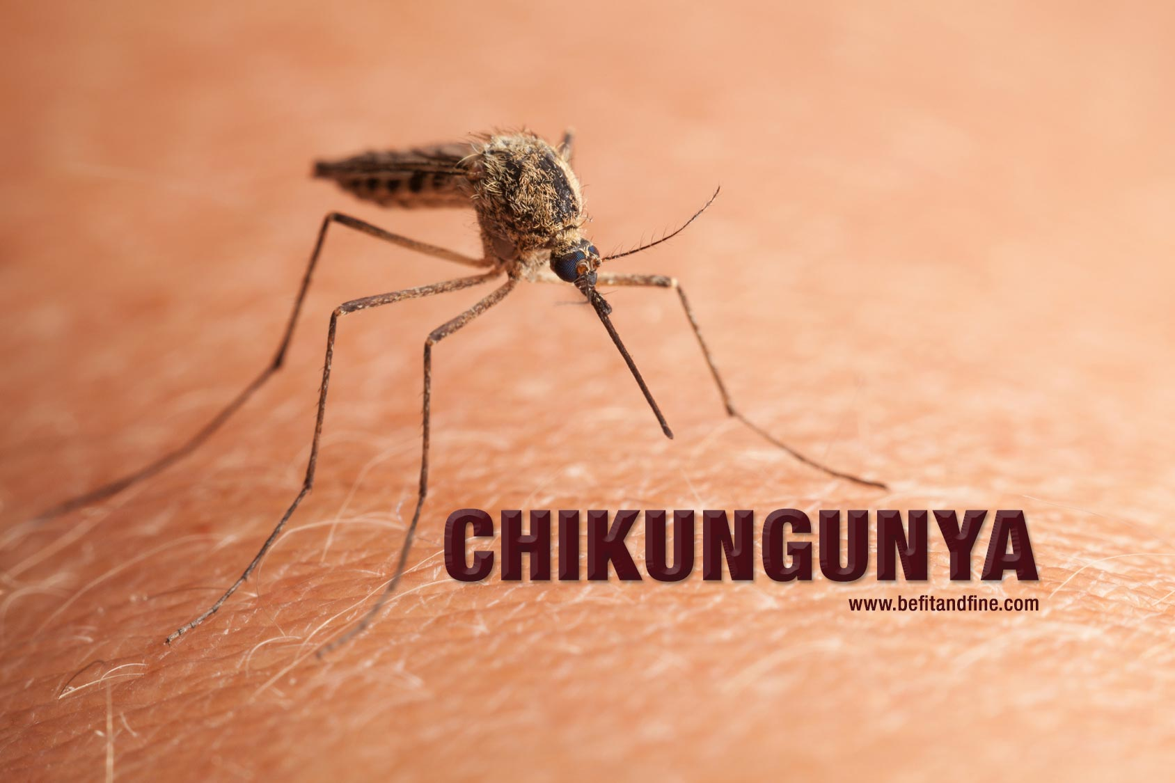chikungunya fever a review of the literature 1 zika virus literature review rev july 13, 2016 zika virus literature review (as of july 13, 2016) updates since last revision are noted in blue.